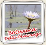 Photos du Delta d'Okawango, Novembre 2006