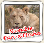Photos du parc d'Etosha, Novembre 2006