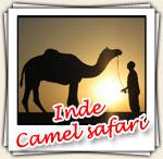 Photos d'un Camel Safari, Fevrier 2007