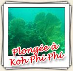Photos de plongee a Koh Phi Phi, Mars 2007