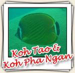 Photos de Koh Tao et Koh Pha Ngan, Mars 2007